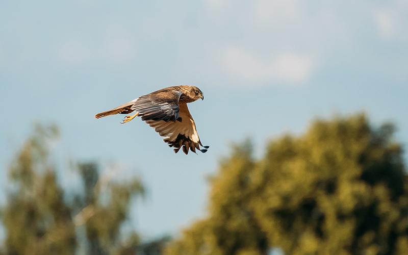 Ловчие птицы