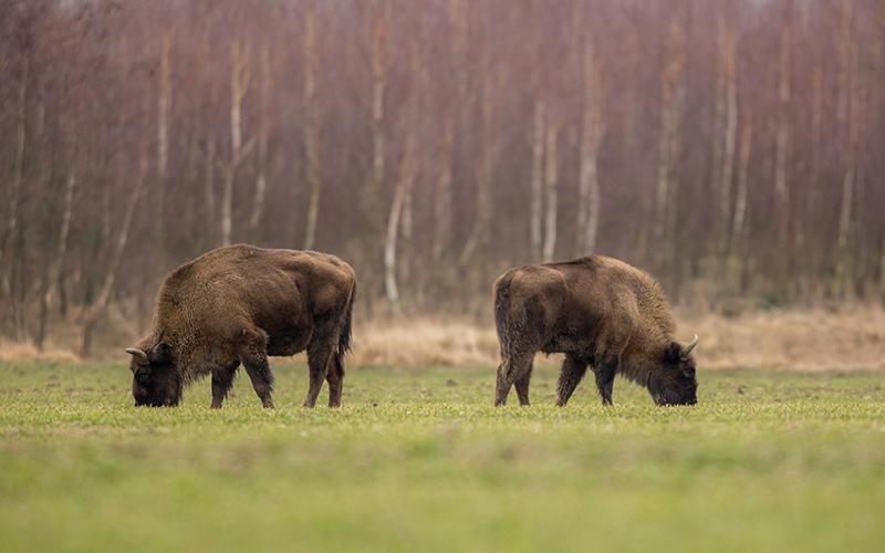 Где охотятся в Беларуси?