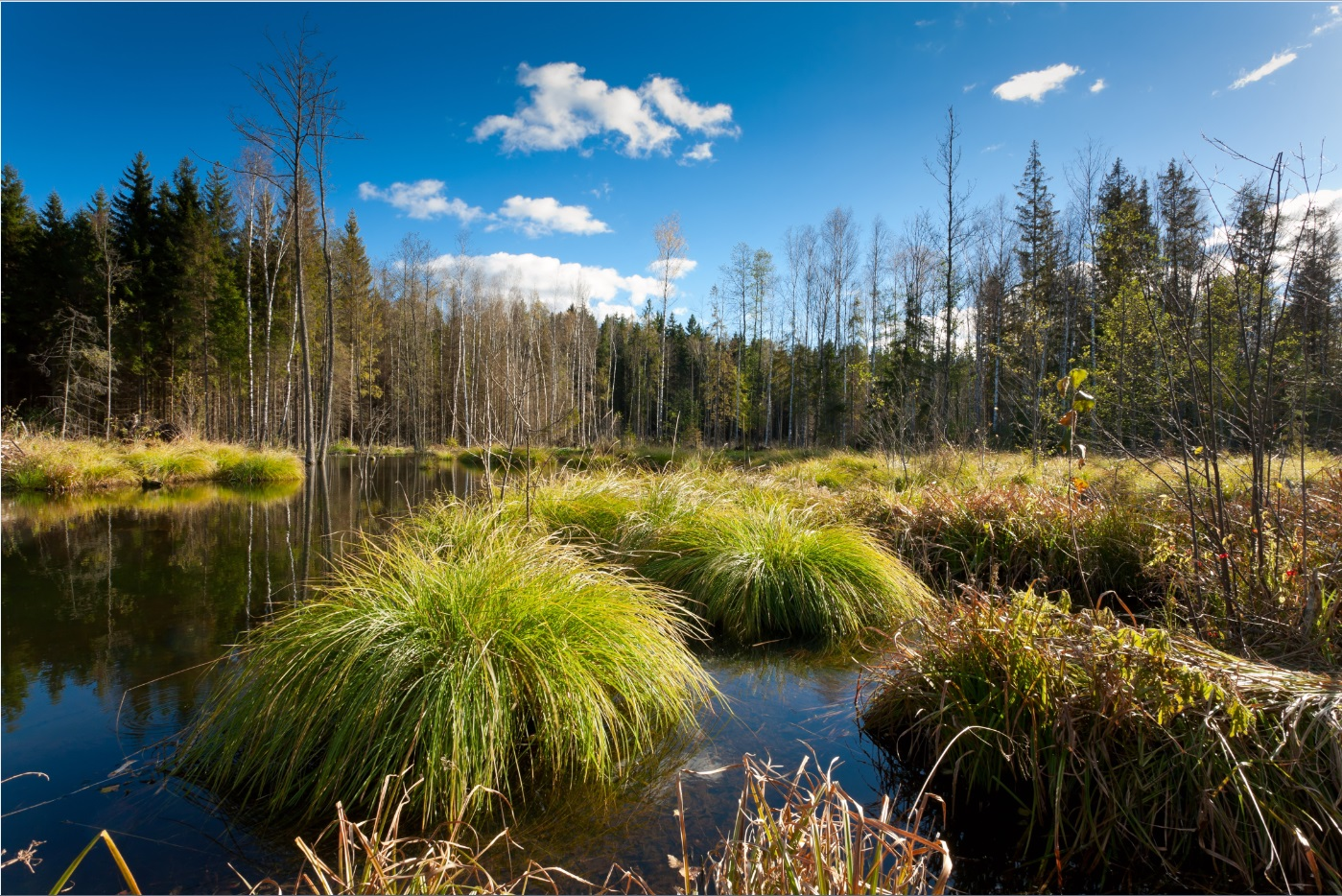 белорусские болота