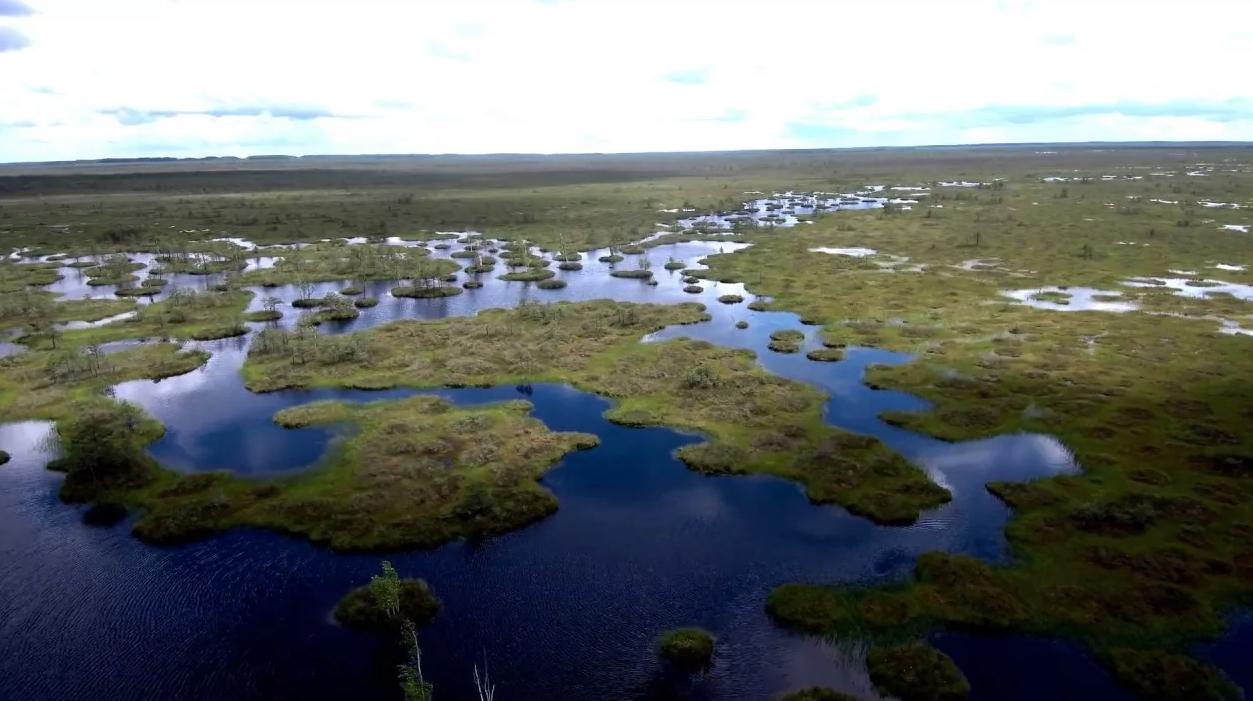 Чарующее болото Ельня